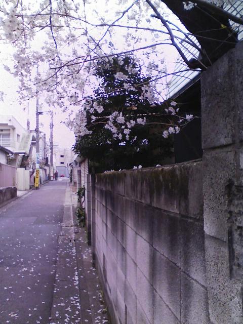 blog - 065